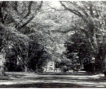 Photo from The Scroll 1949